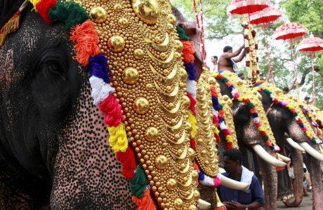 elephant kerala festival rules
